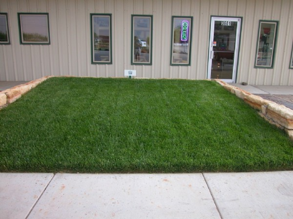 Evergreen Lawn Mixture Agricol