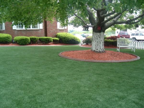 Shade Lawn Mixture