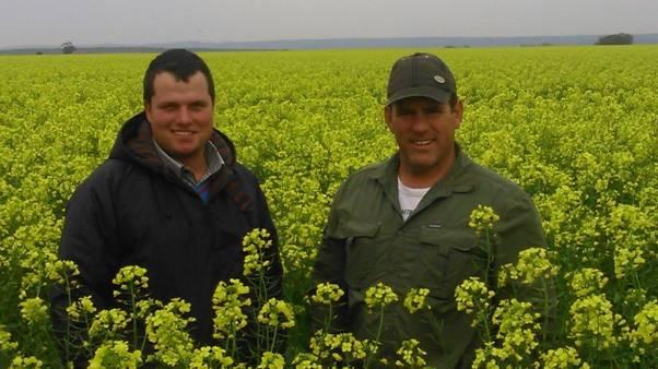 Canola blom in die Suid-Kaap