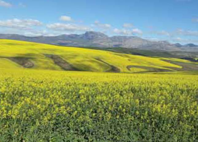 Algemene faktore wat kultivarkeuse vir 2018 kan beïnvloed